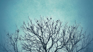 1 blackbird tree